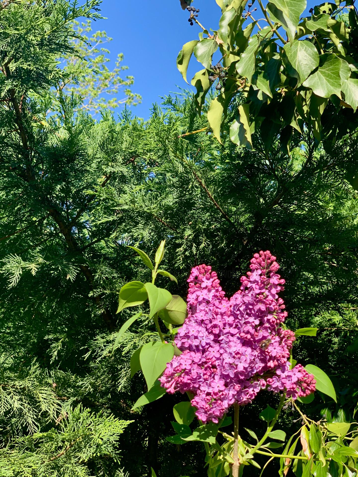 Zoé Valy - Parfum de printemps