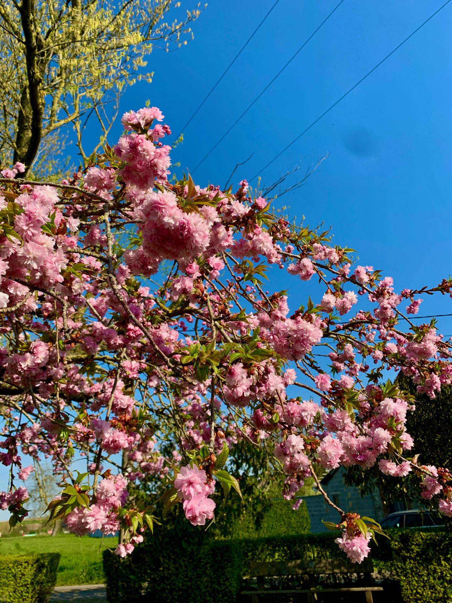 Zoé Valy - Les couleurs du printemps