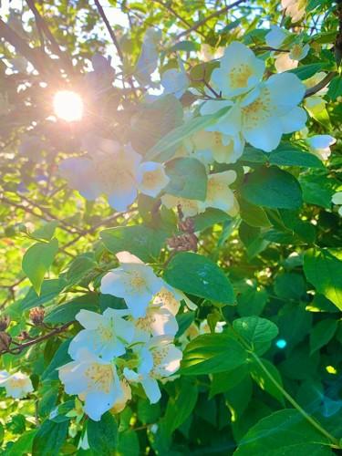 Rêverie de printemps