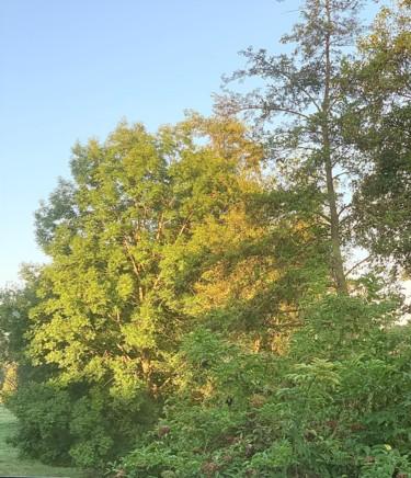 Adieu mon bel arbre