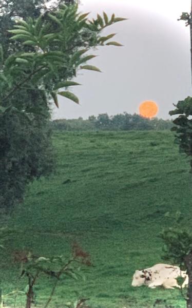 Un matin de pleine lune